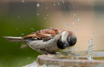 bird whirl