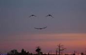 Smile in the sky