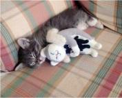 Sweet kitty