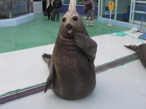 seal_who_me